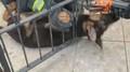 Štěně se zaseklo v bráně. Pomoct ven mu museli hasiči