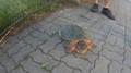 Po Brně se procházela želva