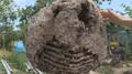 Rekordní hnízdo