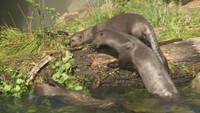 Mláďata vydry ze zlínské zoo