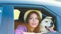 Cestování se psem - ilustrační