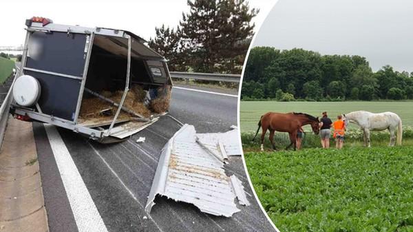 Hasiči na Olomoucku naháněli koně. Po nehodě zvířata utekla z vozíku