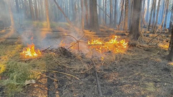 Hasiči měli kvůli horku dvakrát víc výjezdů. Hořely lesy, domy i auta